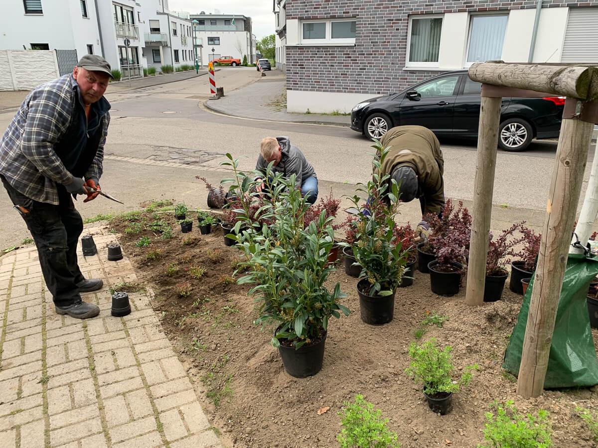 Bepflanzung Baerler Mahnmal
